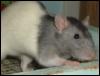 ratkeeper