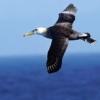avifauna userpic