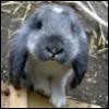 wiebelkonijn userpic
