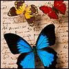Ria: butterflies