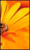 queenhoneybee userpic