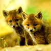 Faythalie: baby foxes are so perfectly cute