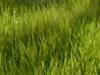 Yard, Weeds