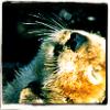 Ith: Nature - Sleepy Otter
