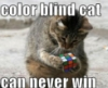 professornana: color blind cat