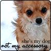 littlehounddog