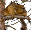 squirrels_ltd userpic
