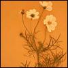 missalexi userpic