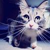 stock - Curious cat