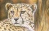 flying_cheetah userpic