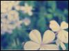 mijardindenubes userpic