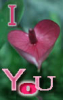 flora: I heart you