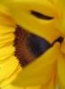 sunkeener userpic