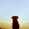 Liz: doggie