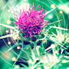 glassthistles userpic