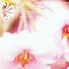 lemonitsa: Delicate Pink