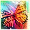 ♥Steph: Butterfly © faerishimmer