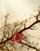 thorn_flower
