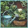 Салон цветов «Стрекоза»