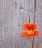 flower grows out of the wall