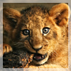 lion_kid userpic