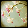 mandyslade495 userpic
