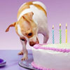 Vanilla  ... Spiked with Slivovitz: birthday dog by crinkly_things