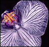 avenathus userpic