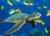 cold_turtle userpic