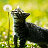 """""""Smokin' hot."""": kitten dandelion crooked_halo8"""
