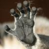 lemur_catta userpic