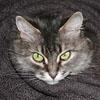 Соня, кошка