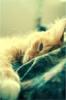 irkin_blond userpic