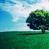 misc: tree