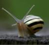 cobosya userpic