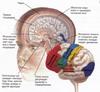 brain destruction