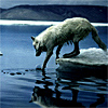 wolveswithwings userpic