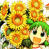 Kohaku 杏葉: sunflower