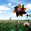 Kimberley: pinwheel