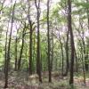 capturelight userpic