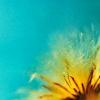 inoverflow userpic