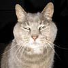 blindpig76 userpic