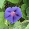 chom_online userpic