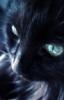 blak_cat