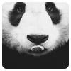 панда !