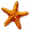 starfish_tattoo userpic