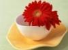 Хризантема в чашке