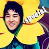 Kangin Special Sunflower