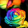 multi-rose.