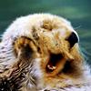 Animals: Otter